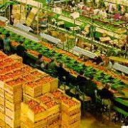 Almacen de naranjas moderno